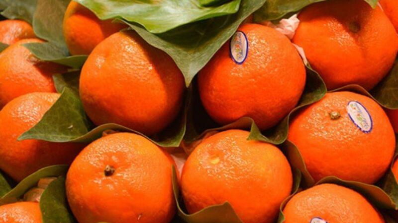 Кыргызстанга 6,2 тонна мыйзамсыз мандарин алынып келинген