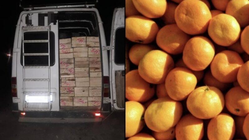 Аткезчилик жол менен ташылып келген 12 тонна мандарин алынды