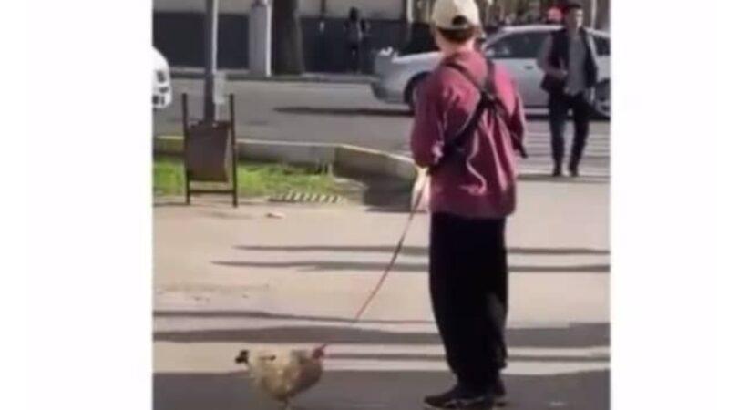 Бишкекте тоок менен сейилдөө челленджи уланууда