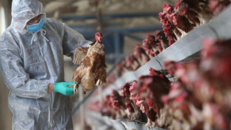 Гинцбург: «Негизи, куш тумоосунун пандемиясына даярданып жатканбыз»